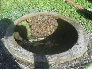 Bee Hive in septic tank
