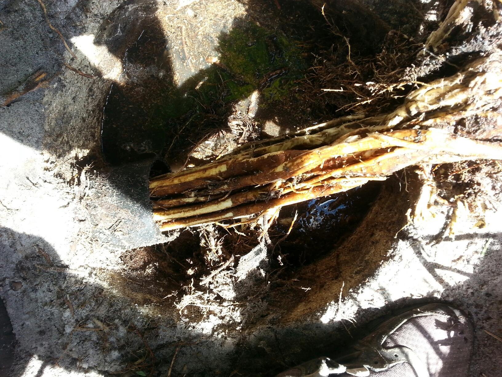 Jupiter Septic Photos Septic Photos Drainfield